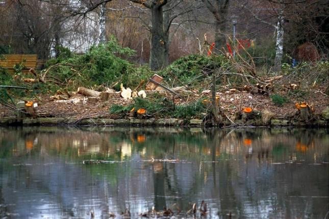 Ärger um Fällungen im Stadtpark Oker