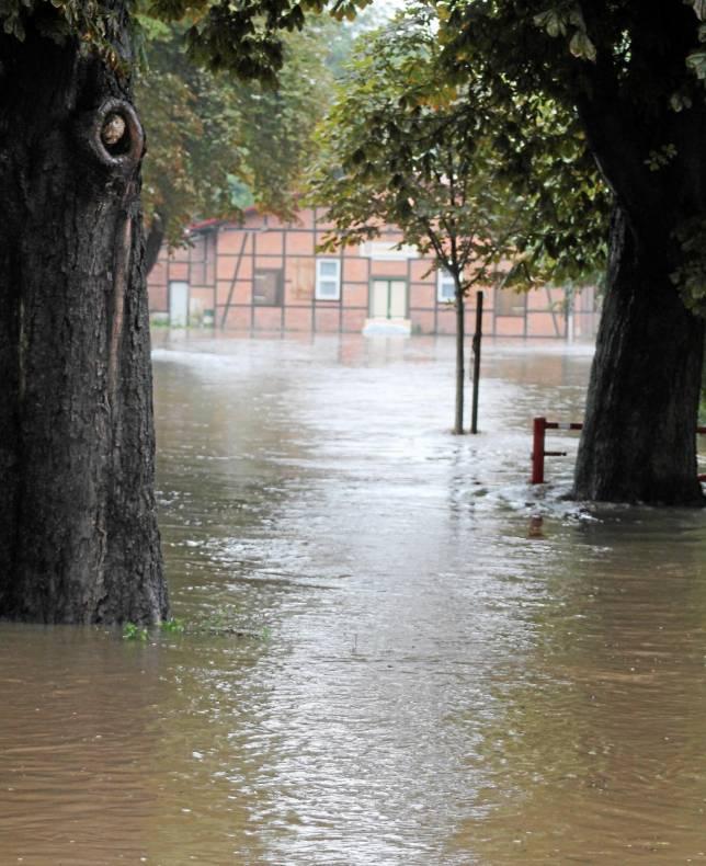 """Memmert warnt vor """"Hochwasser-Demenz"""""""
