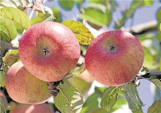 """Apfelfest bei """"Willeckes Lust"""""""