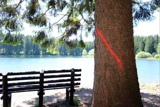 Borkenkäfer: Bäume müssen gefällt werden