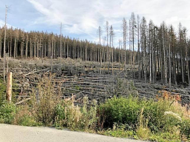 Vortrag über Waldzerstörung im Harz