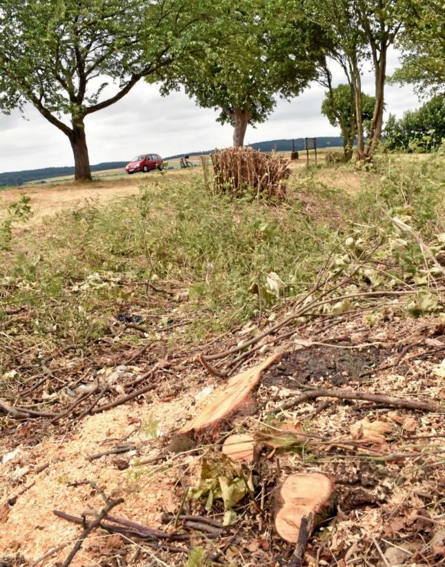 Nach Kritik: Behörde pflanzt 15 neue Bäume