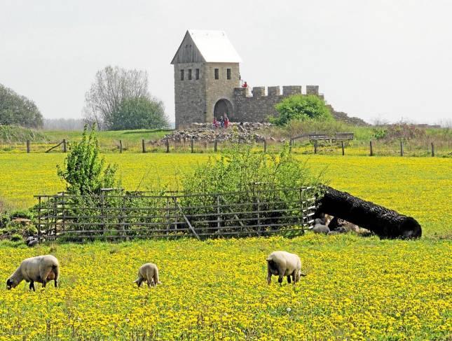 Pflanzeinsatz auf der Pfalz
