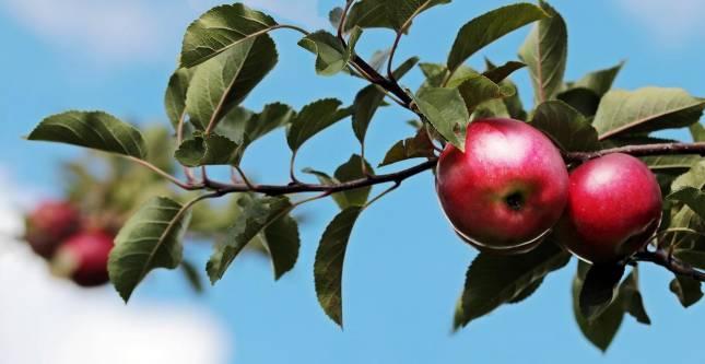 Obstbäume können gepachtet werden