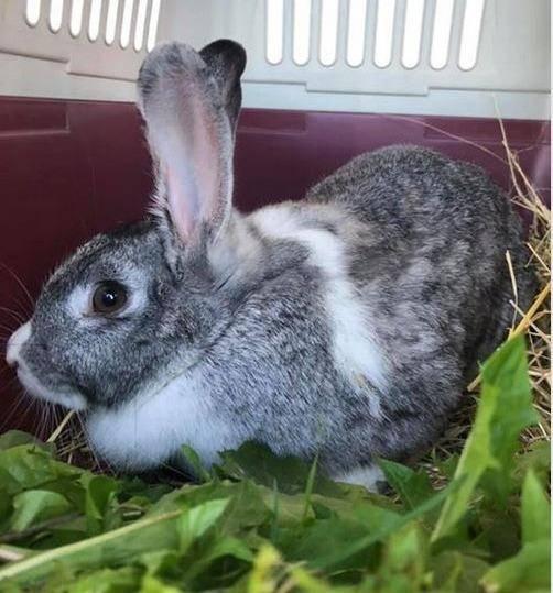 Kaninchen im Doppelpack gefunden