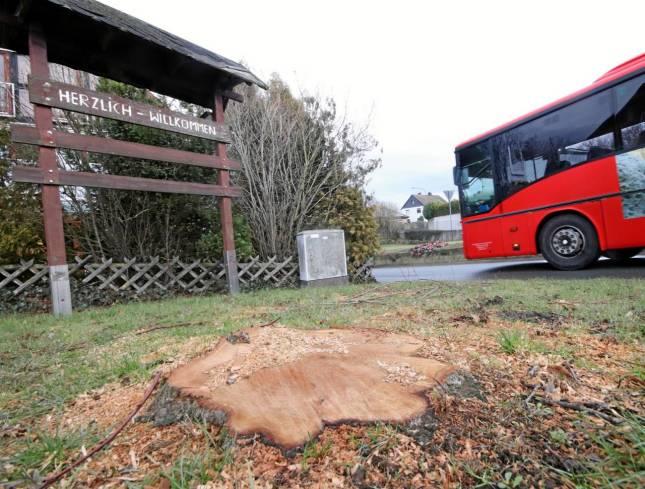 Baumfällungen sorgen für Unmut