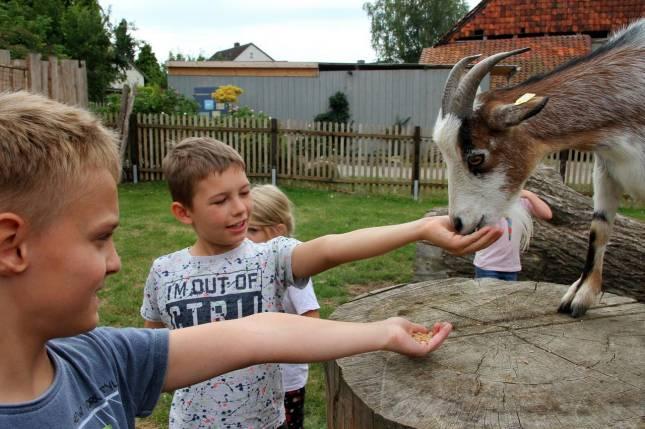Erlebnisreicher Ferientag auf dem Bauernhof