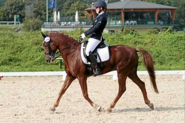 Zwei Tage Pferdesport im Sportpark