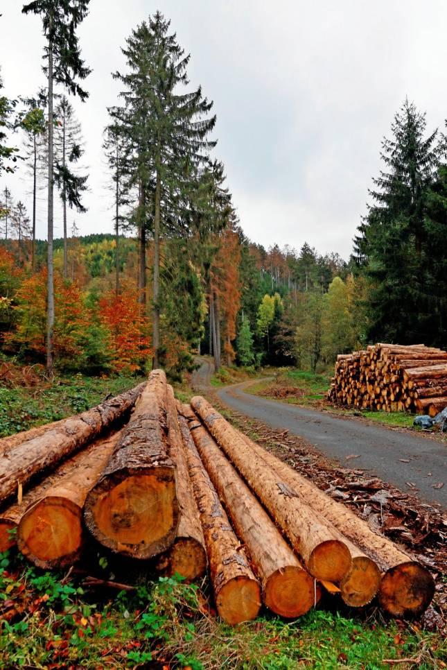 Walderhalt wird teuer