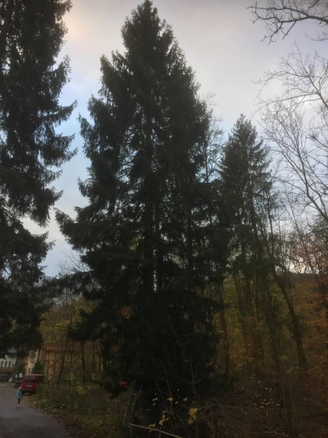 Dieser Baum soll es sein