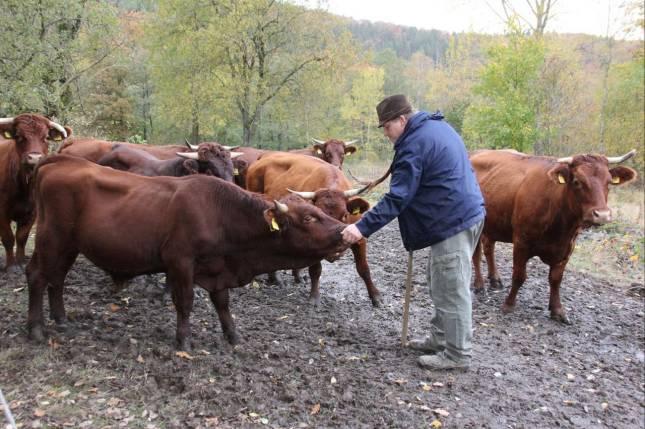 Große Anteilnahme für tote Kühe