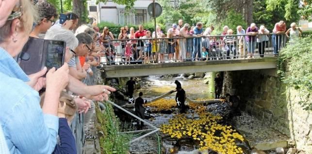 Mehr als 1000 Enten auf der Radau