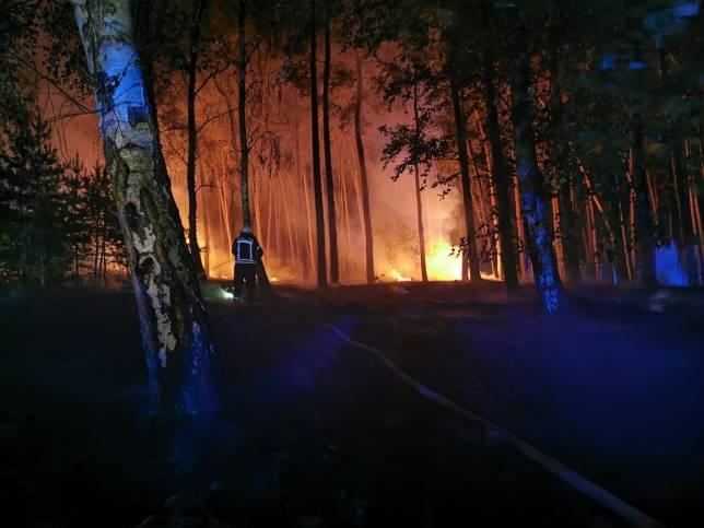 Kiefernwald in Brand