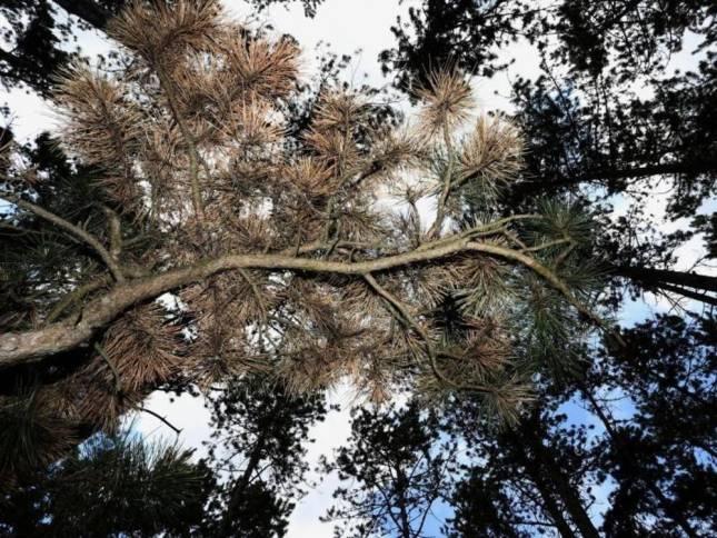 Jahrhundertkatastrophe für die Wälder