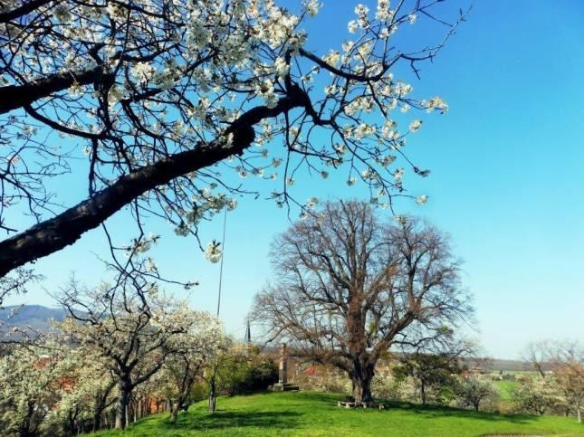 Kirschblüte lohnt einen Besuch