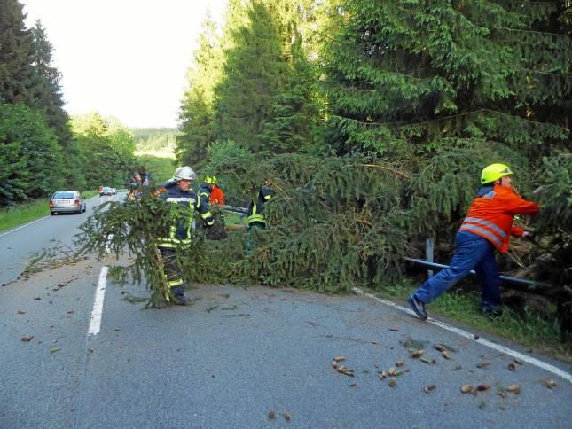 Baum stürzt auf Bundesstraße 241